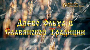 Древо Ольха в Славянской Традиции