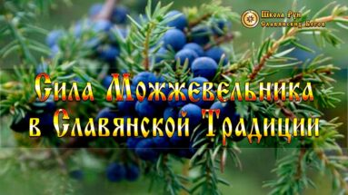 Сила Можжевельника в Славянской Традиции