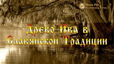 Древо Ива в Славянской Традиции