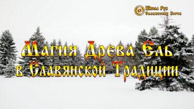 Магия Древа Ель в Славянской Традиции