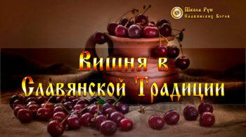 Вишня в Славянской Традиции